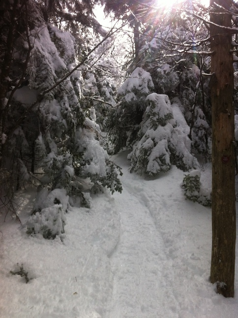 Path up Cornell mountain, happily packed down by snowshoers